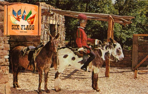 six-flags_spanish_mule