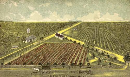 howell_rose-garden-etc_1888