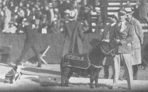 peruna-rotunda_1933