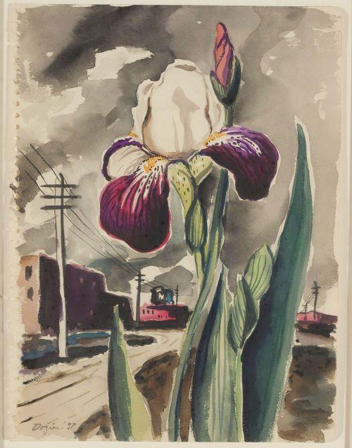 dozier_iris-purple_1937_dma