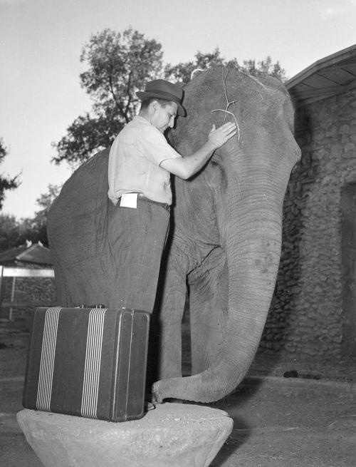 FW-zoo_hamilton-hittson_elephant_080240_UTA