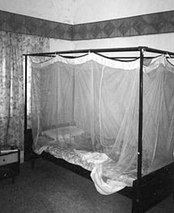 mosquito-netting