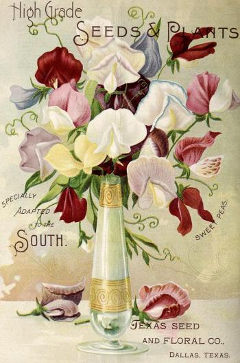 1896_tx-seed-floral_1896_flowers