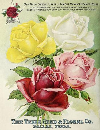 1911_tx-seed-floral_1911_roses
