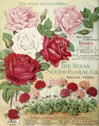 1912_tx-seed-floral_1912_roses