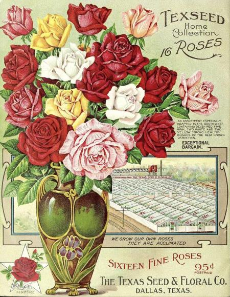 1913_tx-seed-floral_1913_roses