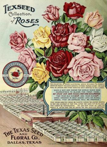 1915_tx-seed-floral_1915_roses
