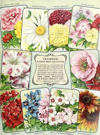 1917_tx-seed-floral_1917_flowers