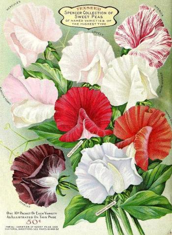 1917_tx-seed-floral_1917_flowers_a