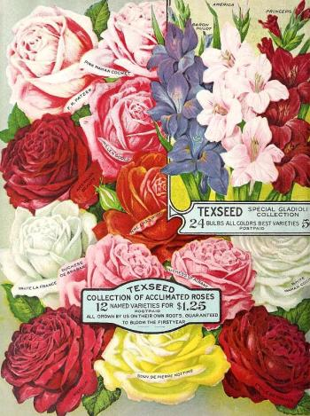 1917_tx-seed-floral_1917_roses