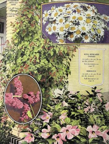 1920_tx-seed-floral_1920_daisies