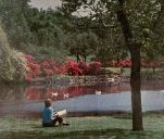 azaleas_turtle-creek_spring_swb-phone-book_1968_ebay