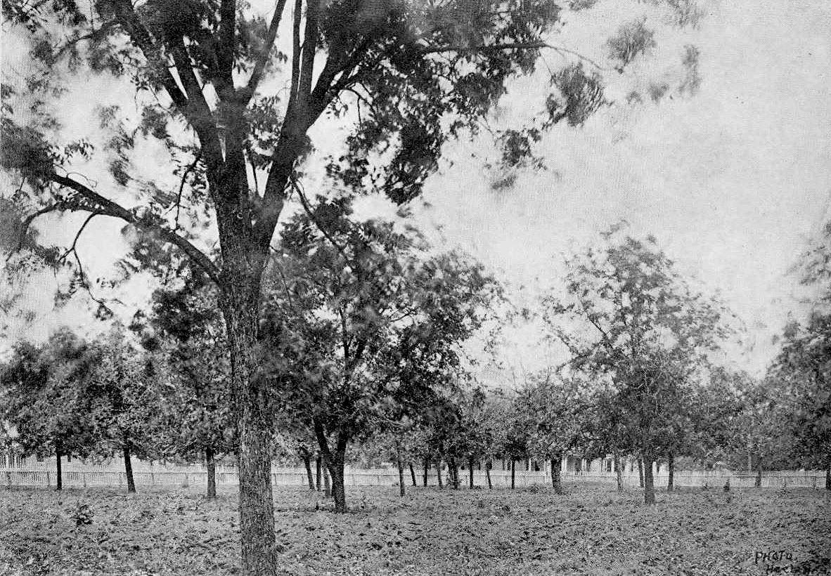 ursuline_1921-yrbk_pecan-grove